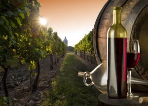 bouteille barrique vignes